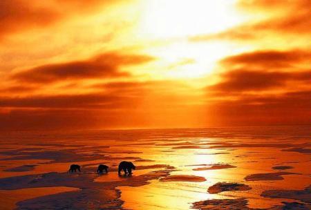 kutub-utara